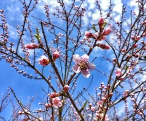 blossom, blue sky, and sunshine image