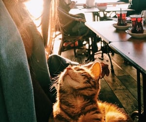 ask, smile, and cats image