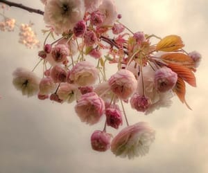 beautiful, cute, and flowers image