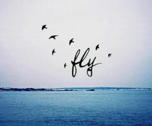 fly, bird, and sea image