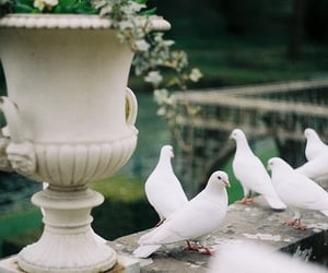 bird, dove, and vintage image