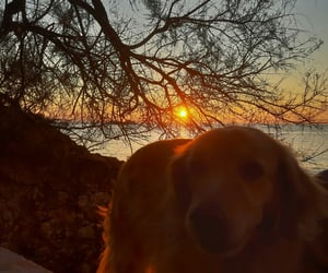 dog, places, and sunset image