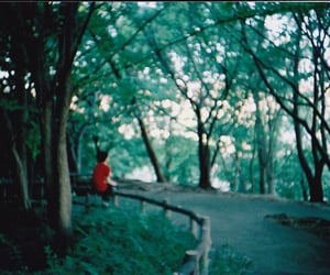 analog, forest, and lights image