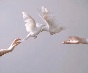 bird, white, and hands image