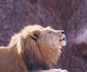 adorable, lion, and animal image