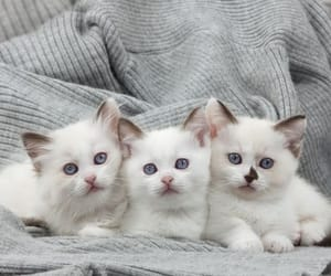 cats, Gatos, and kittens image
