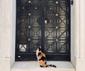 Athens, black, and cat image