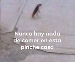 espanol, funny, and memes image