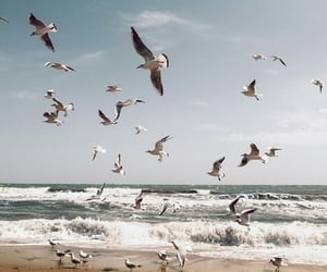 bird, beach, and ocean image