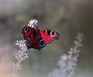 bokeh, nature, and butterfly image