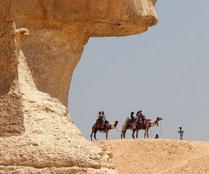 egypt, photography, and camel image