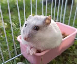 cage, winter white, and winter white hamster image