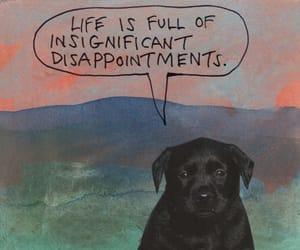 dog and life image