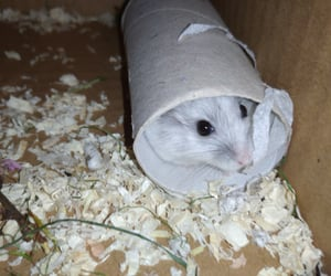 hamster, lovely, and small image