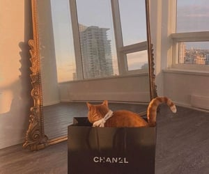 cat, chanel, and home image