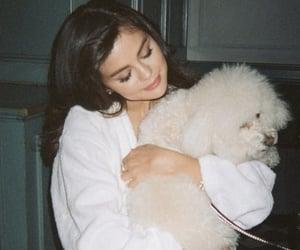 beautiful, girl, and selena gomez image