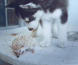 dog, hedgehog, and friends image