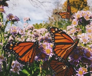 butterfly, flowers, and aesthetic image
