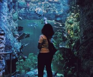 aquarium, indie, and ocean image