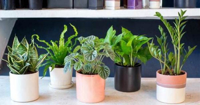 article, plant, and air purifier image