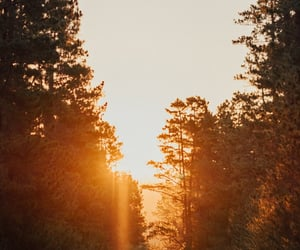 forest, hike, and sun image