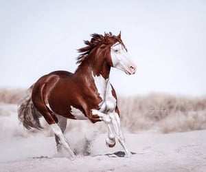 horse, western, and paint horse image