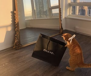 cat, chanel, and animals image