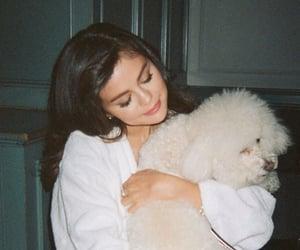 selena gomez, dog, and selena image