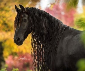 animal, photograph, and black horse image