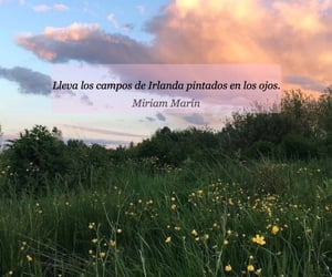 flowers, poesia, and quotes image