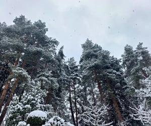 beautiful, forest, and snowing image