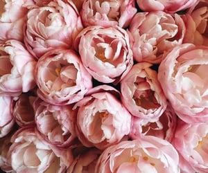 flowers, cute, and peonies image