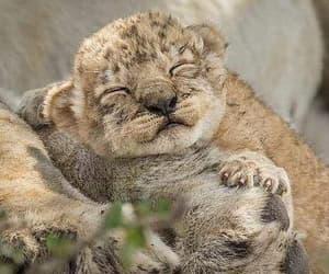 baby animals and wild cats image