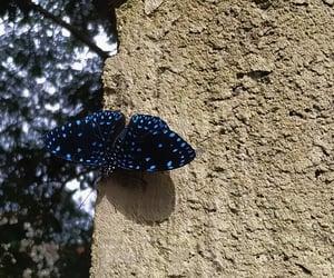 borboleta, blue, and brasília image