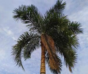 blue sky, ceu de brasilia, and céu image