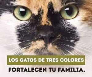 Animales, Gatos, and felinos image