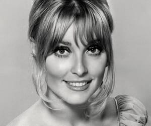 sharon tate and the valley of the dolls image