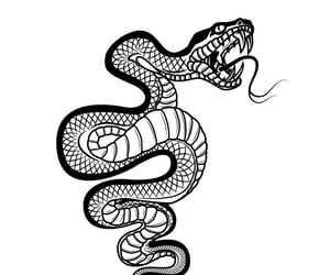 serpent, serpents, and snake image