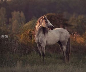 animal, photograph, and horse image