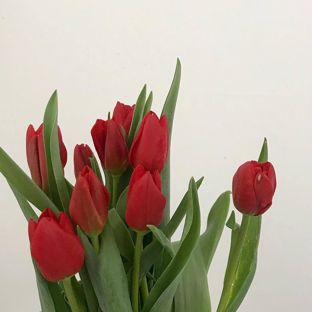 flowers and __minimoi image