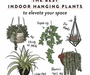art, illustration, and indoor plants image