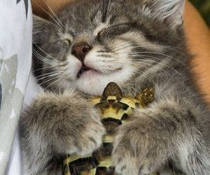 kitten, slepping, and turtle image