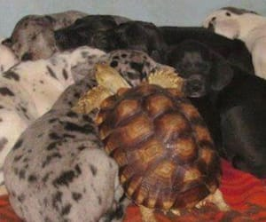 pups, napping, and turtle image