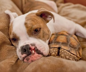 dog, turtle, and friends napping image