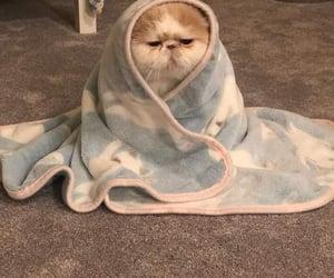 cat, animals, and kitten image