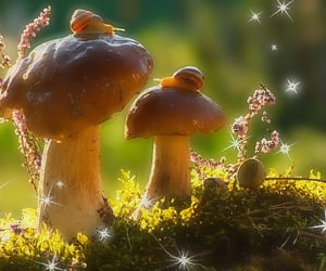 nature, mushroom, and snail image