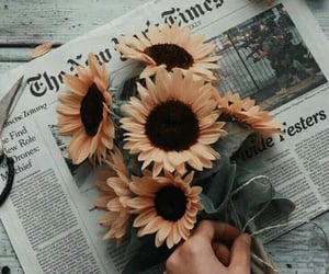 flowers, sunflower, and newspaper image