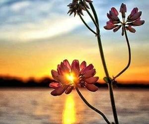 atardecer, belleza, and flor image