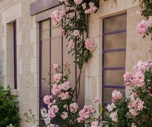 flowers, pink, and places image