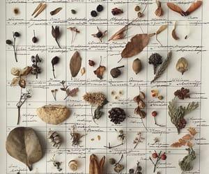 botanic, botanical, and nature image